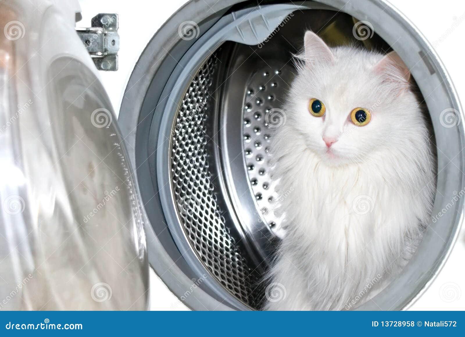 pet washing machine cat