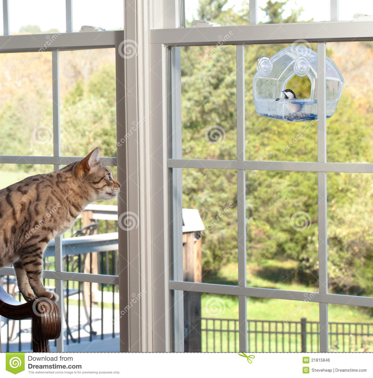 Window bird feeder cat - Bengal Birdfeeder Cat Chickadee Feeder