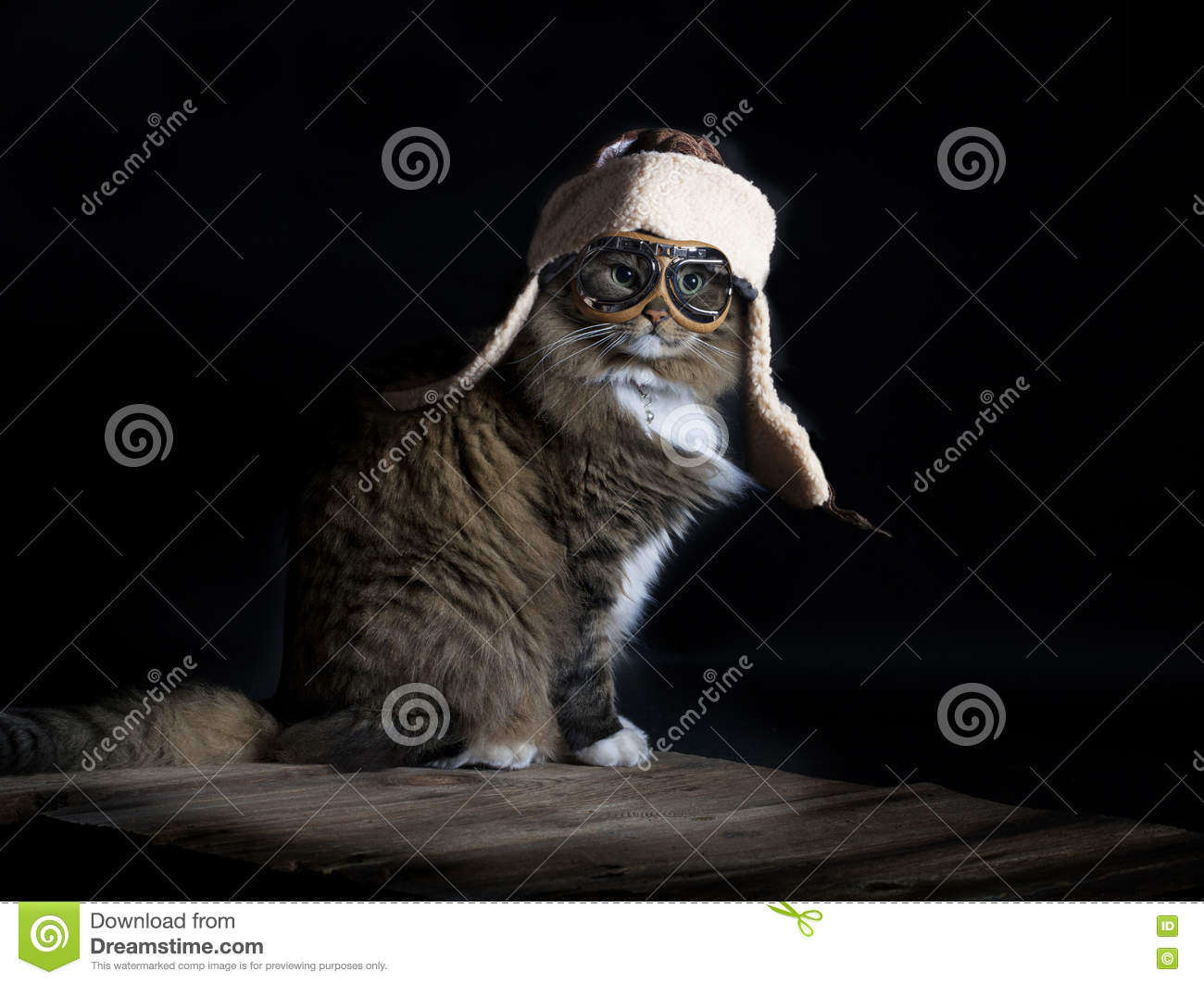Cat Wearing Aviator Cap