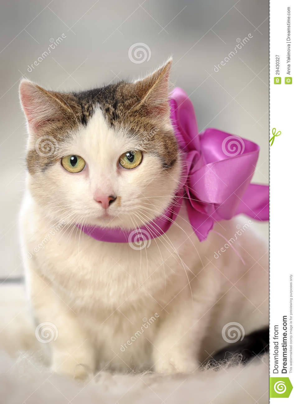 Cat Wearing A Bow Royalty Free Stock Photography Image