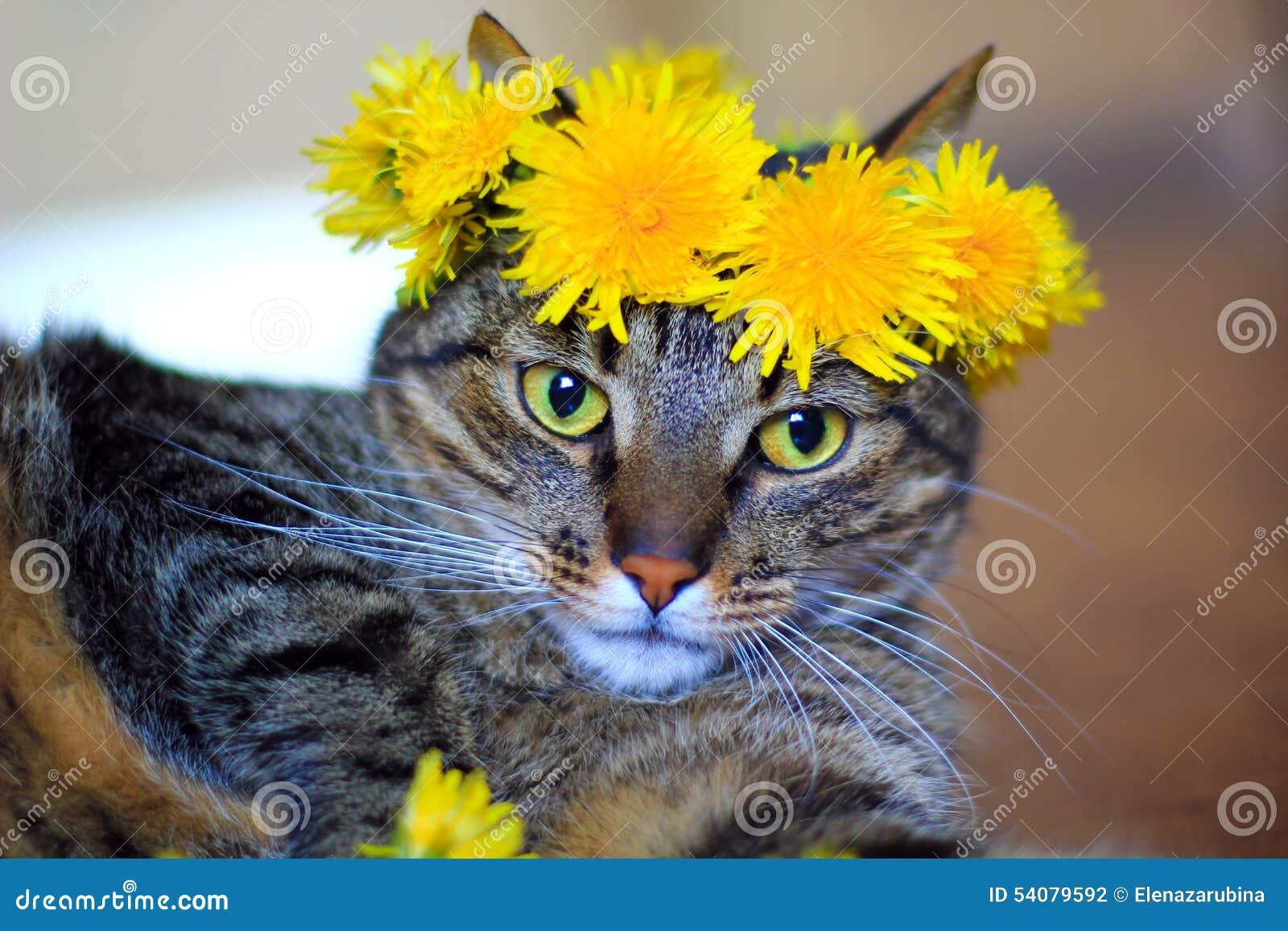 Cat Wearing Dandelions Flower Crown Stock Photo Image Of Yellow