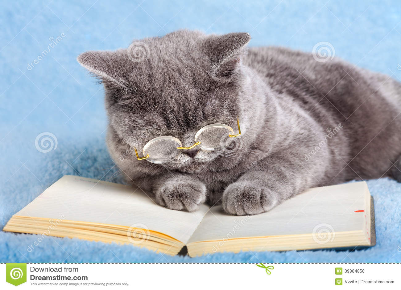 francais chat Villeurbanne