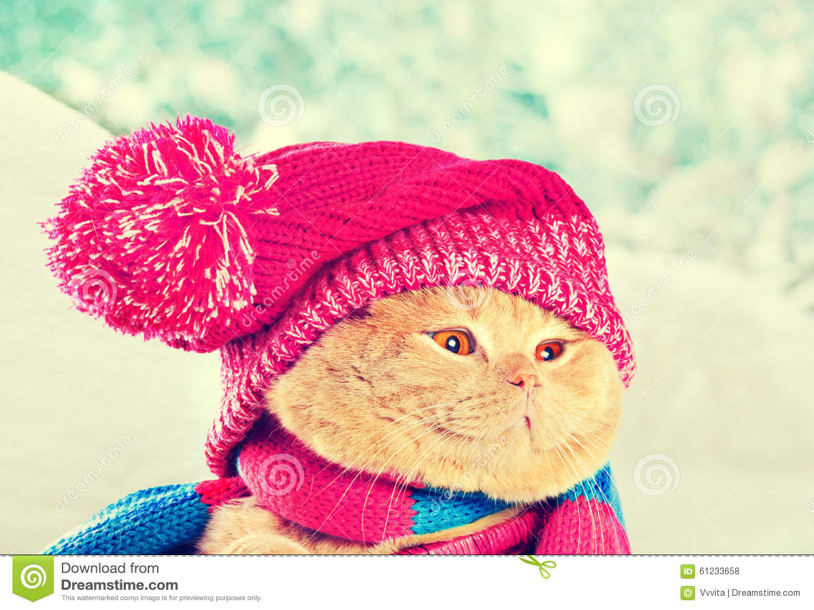 b228fc2e Cat wearing knitting hat stock photo. Image of animals - 61233658