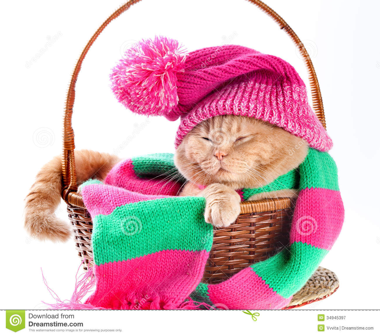Cat wearing a pink knitting hat with pompom and a scarf