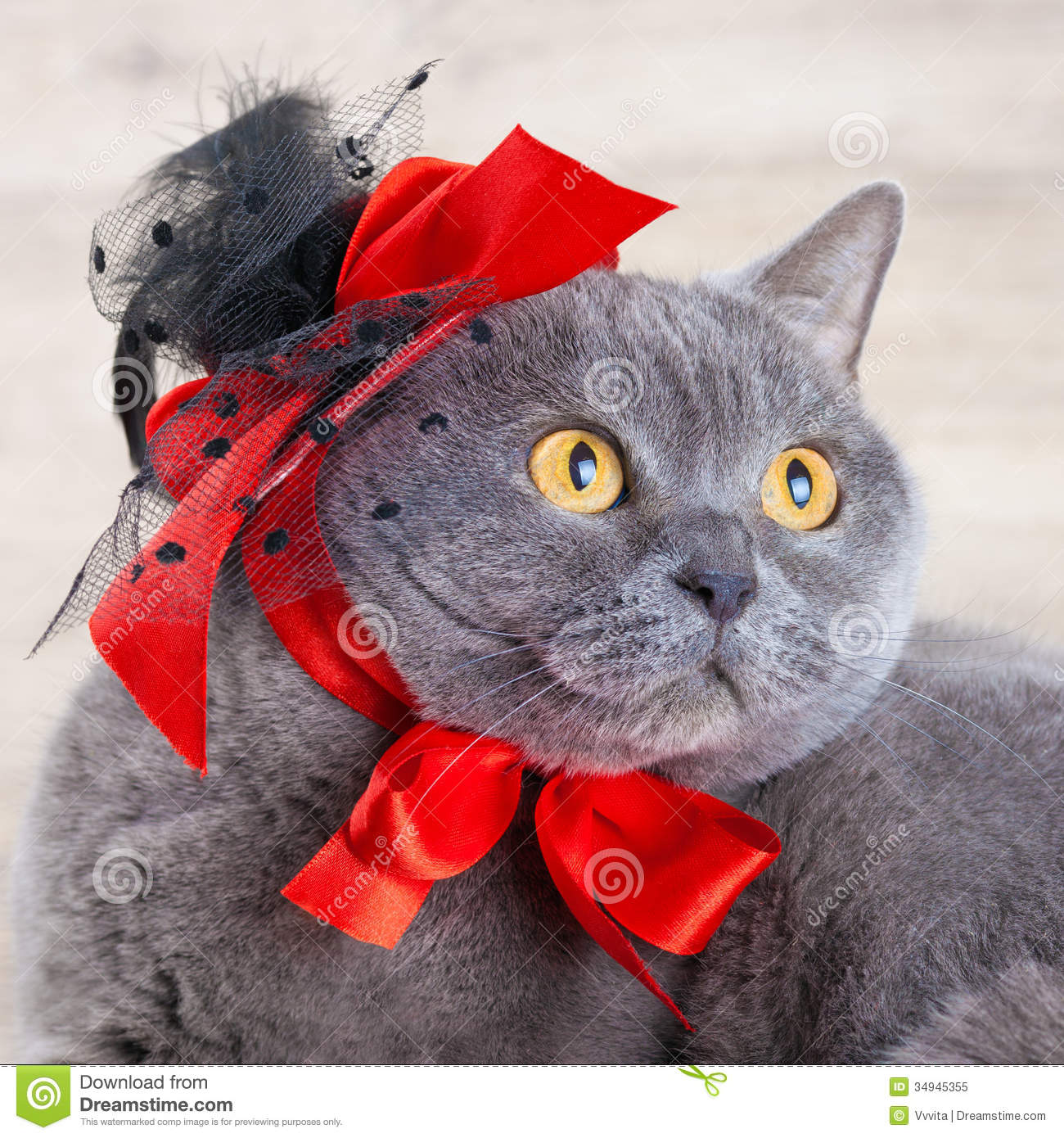 Cat Wearing Red Hat Royalty Free Stock Photo - Image: 34945355