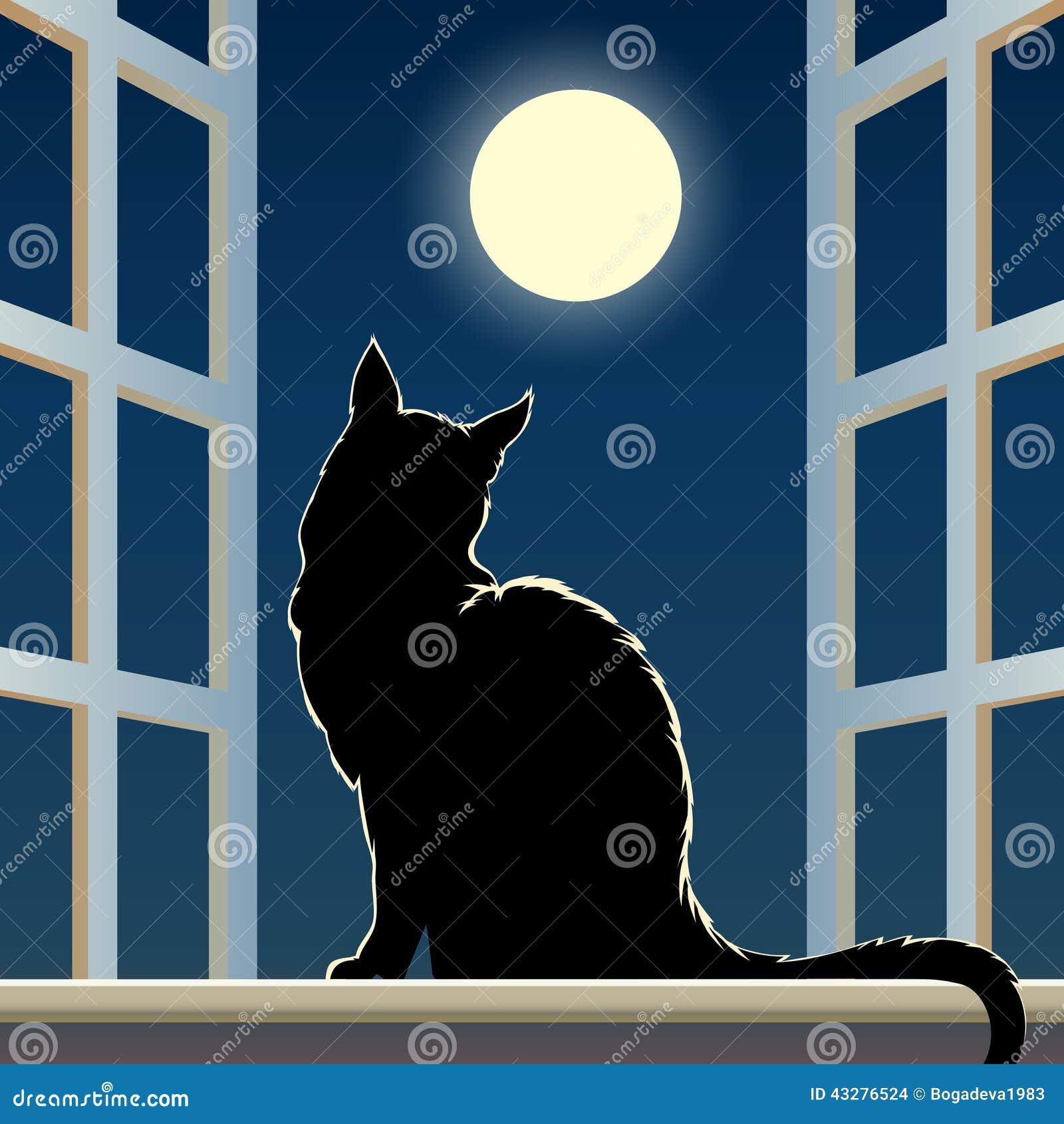 Black Cat By Window Night