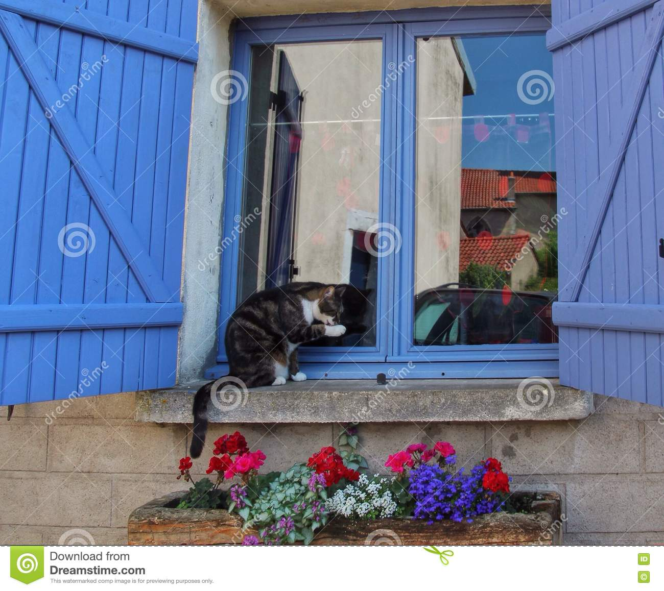 Cat stock photo image 71719717 for Fenetre french
