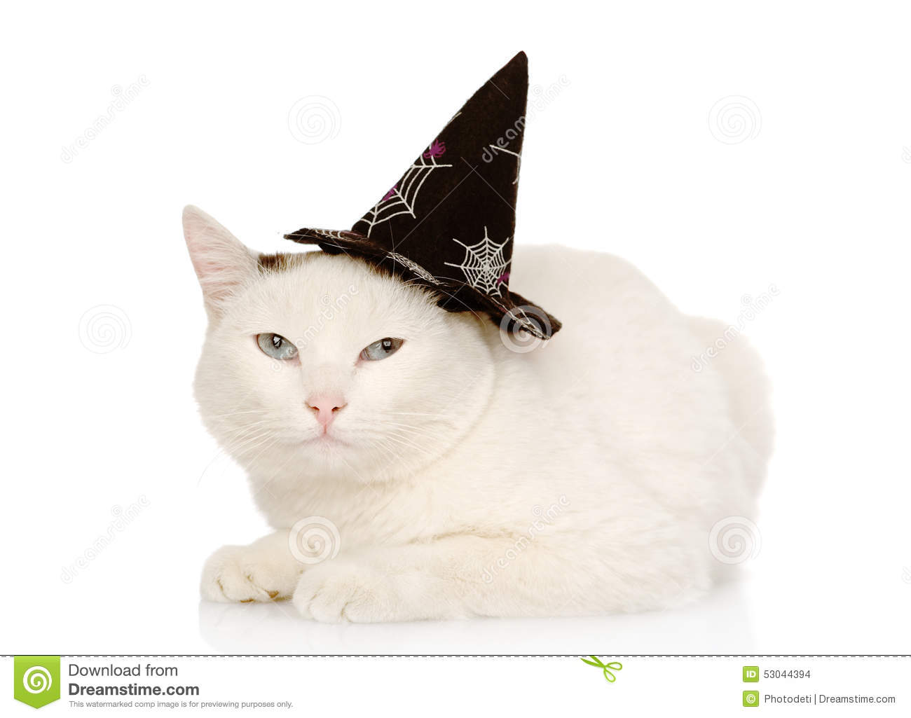 cat with witch hat for halloween on white background stock photo image of adorable costume. Black Bedroom Furniture Sets. Home Design Ideas