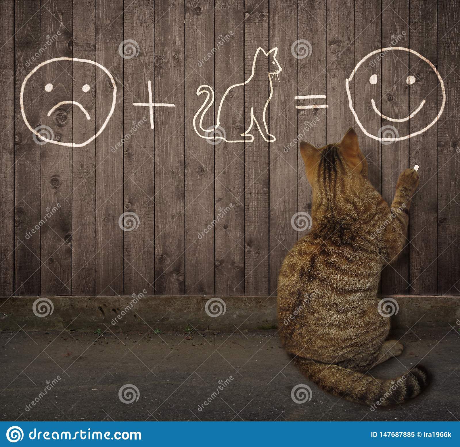 Cat writes an equation on the fence