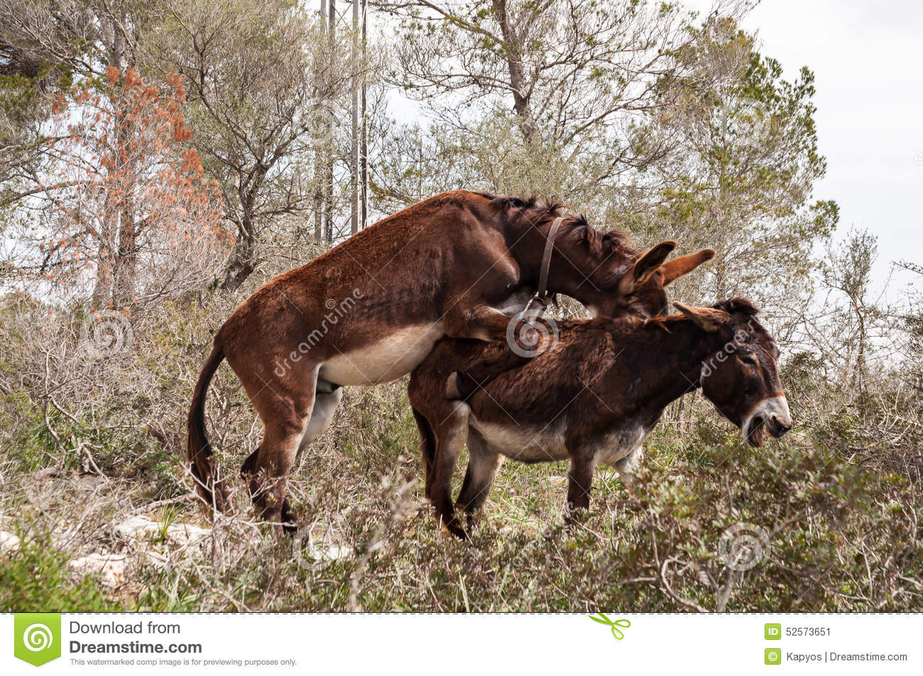 Donkeys Mating | just b.CAUSE