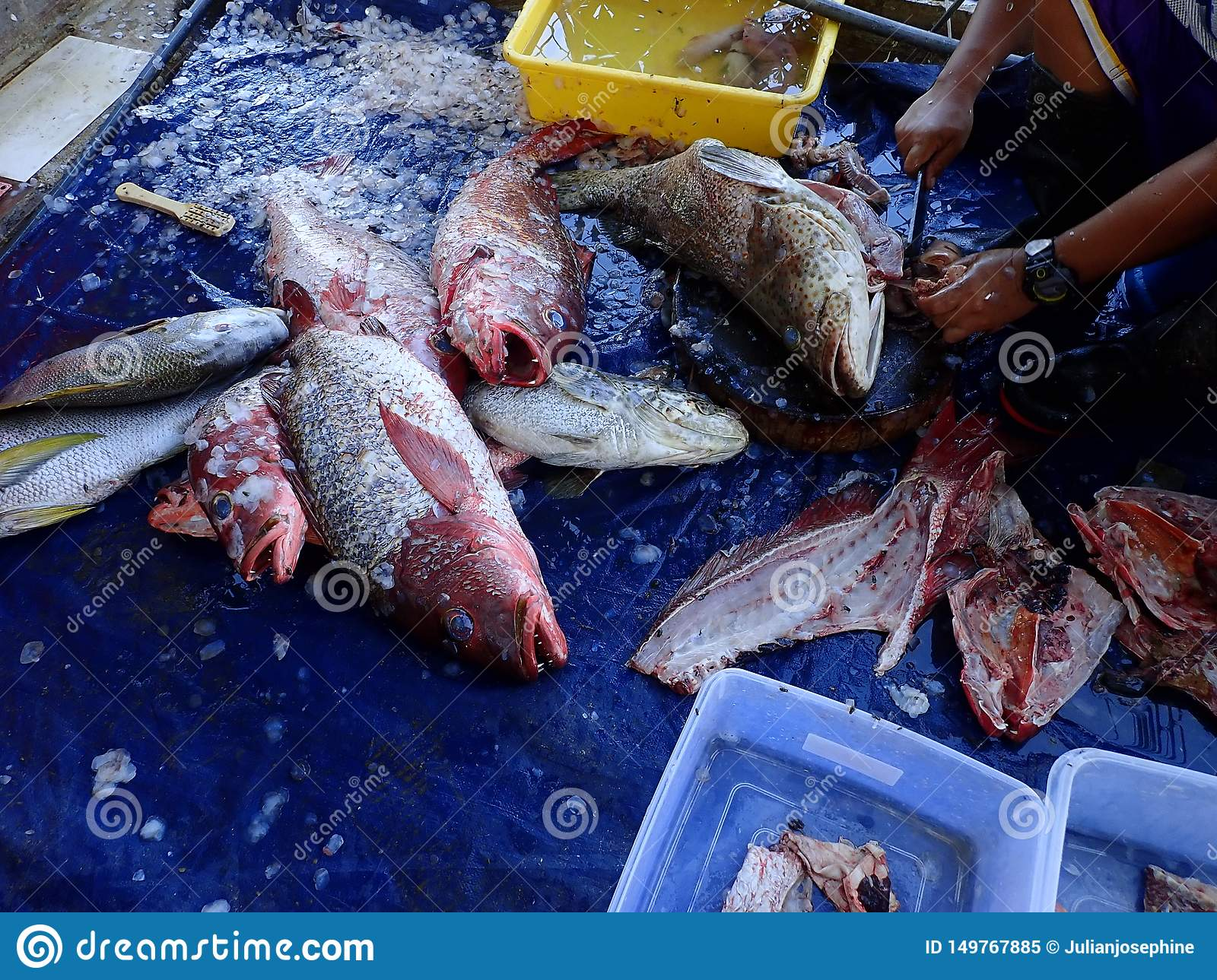 Catch of the day and cleaned and fresh fishes ready to cook.