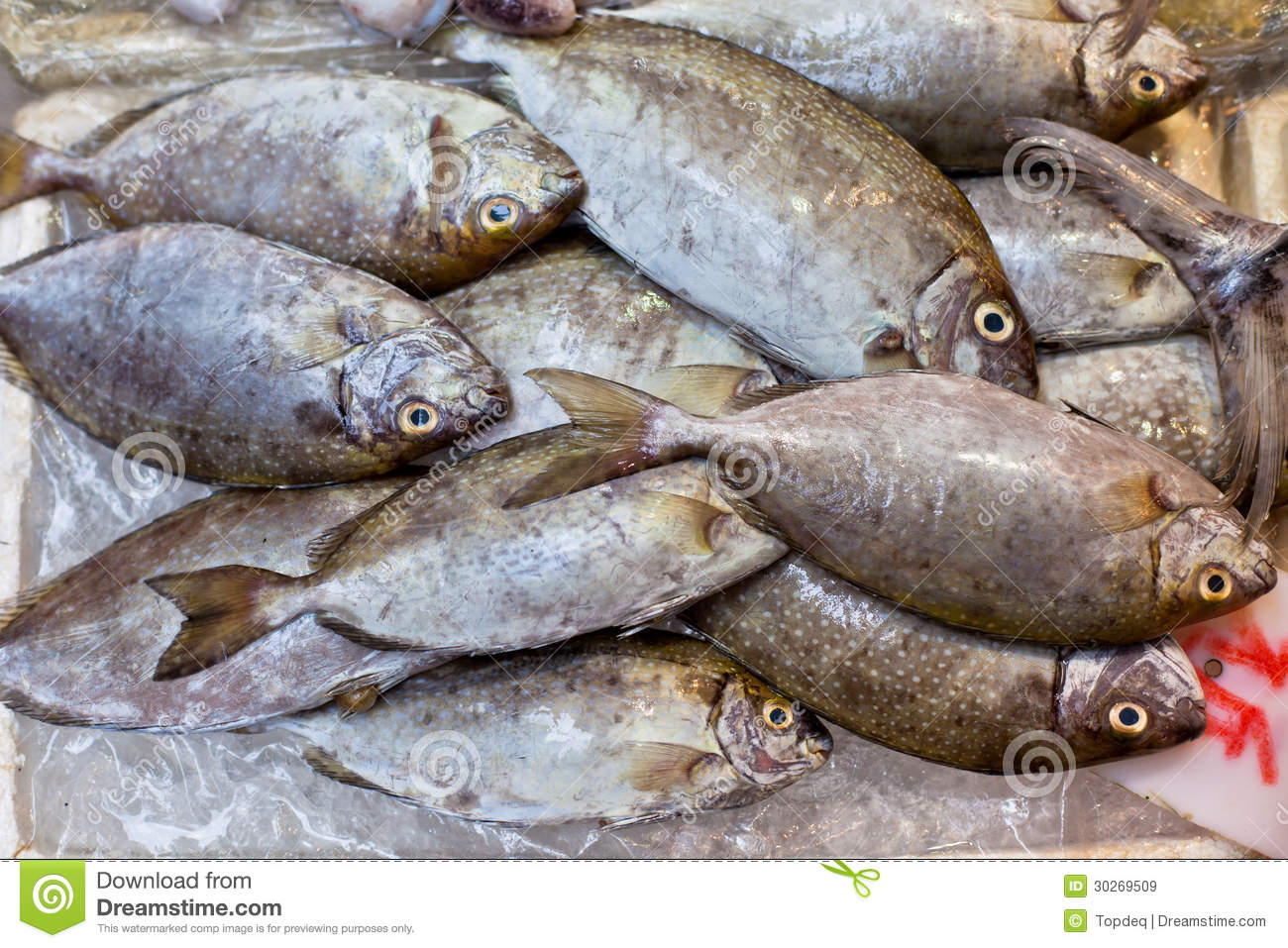 Fresh fish at local asian market royalty free stock images for Local fish market