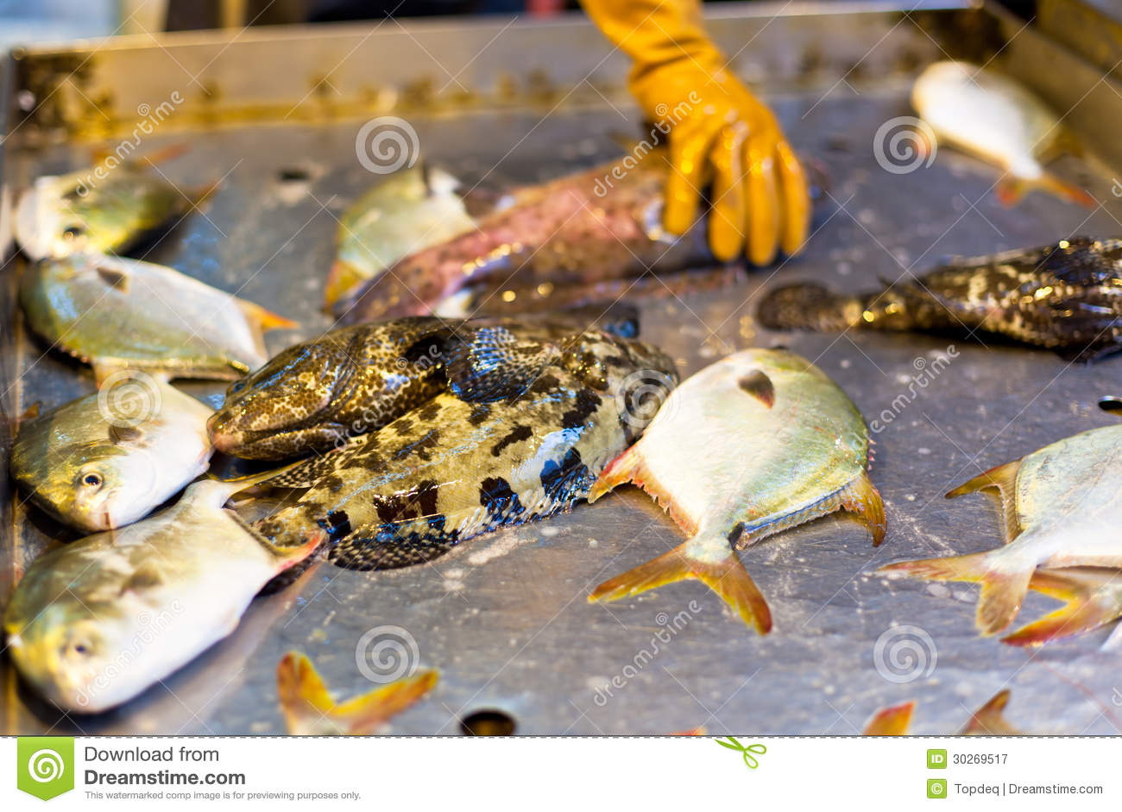 Fresh fish at local asian market royalty free stock for Local fish market