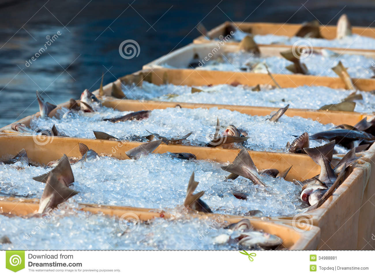 Catch of the day royalty free stock photo cartoondealer for How to ship fish