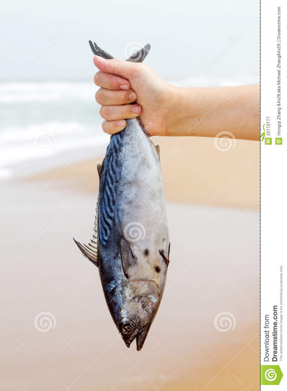 Catch fish royalty free stock photography image 22172177 for People catching fish
