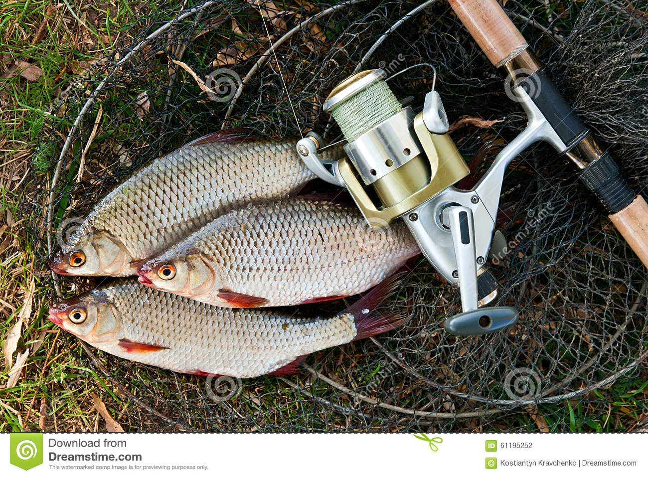 Freshwater fish bait - Catching Freshwater Fish And Fishing Rods With Fishing Reel Stock Reel Combo