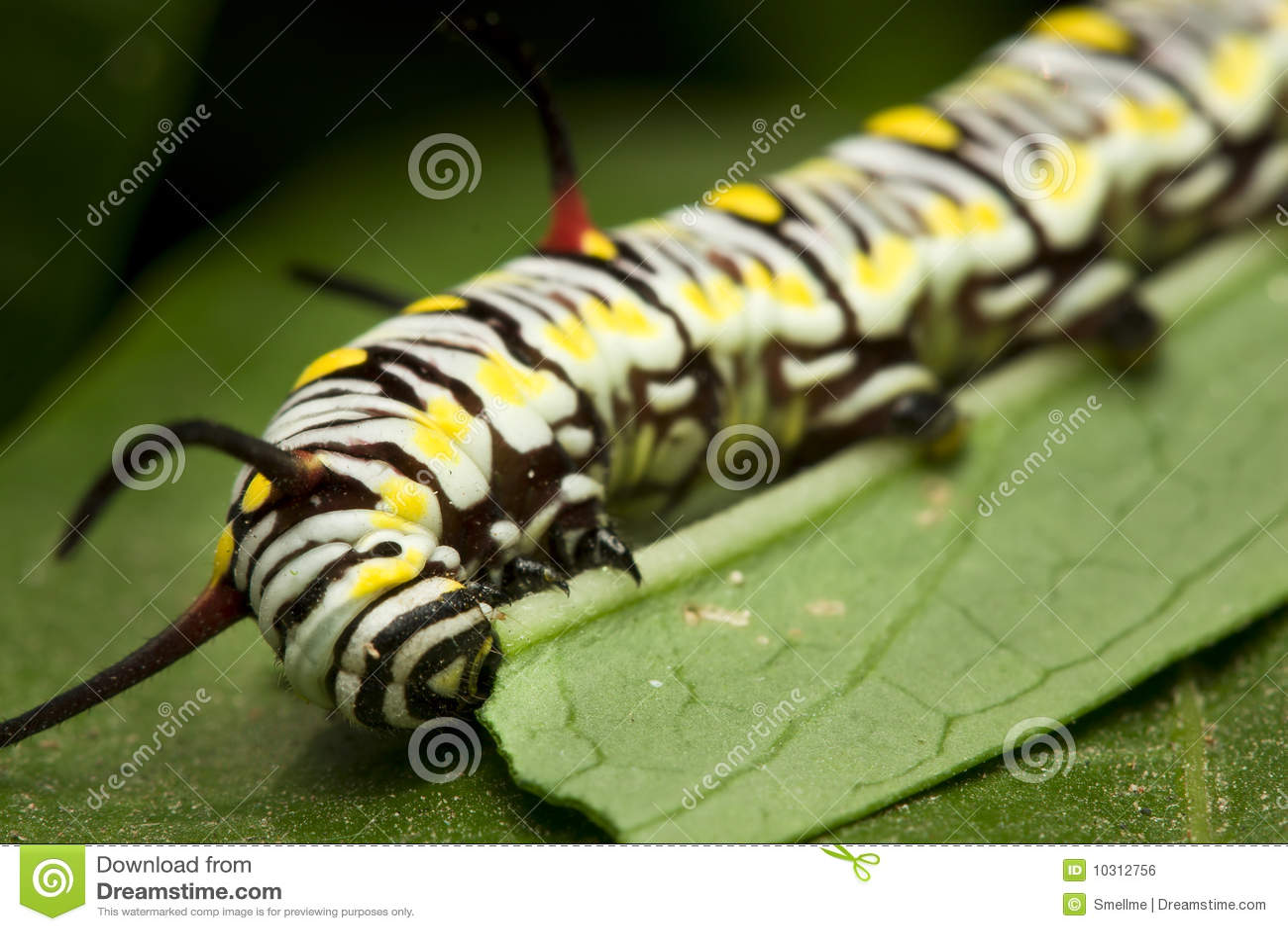 Download Caterpillar stock photo. Image of harmony, ecosystem - 10312756