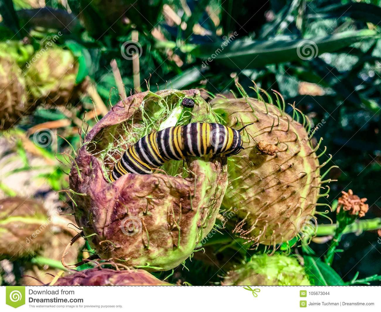 Caterpillar crawling on a thorny plant
