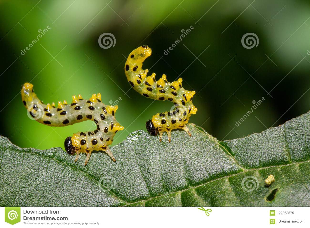 Caterpillars Eating A Leaf, Macro Photography