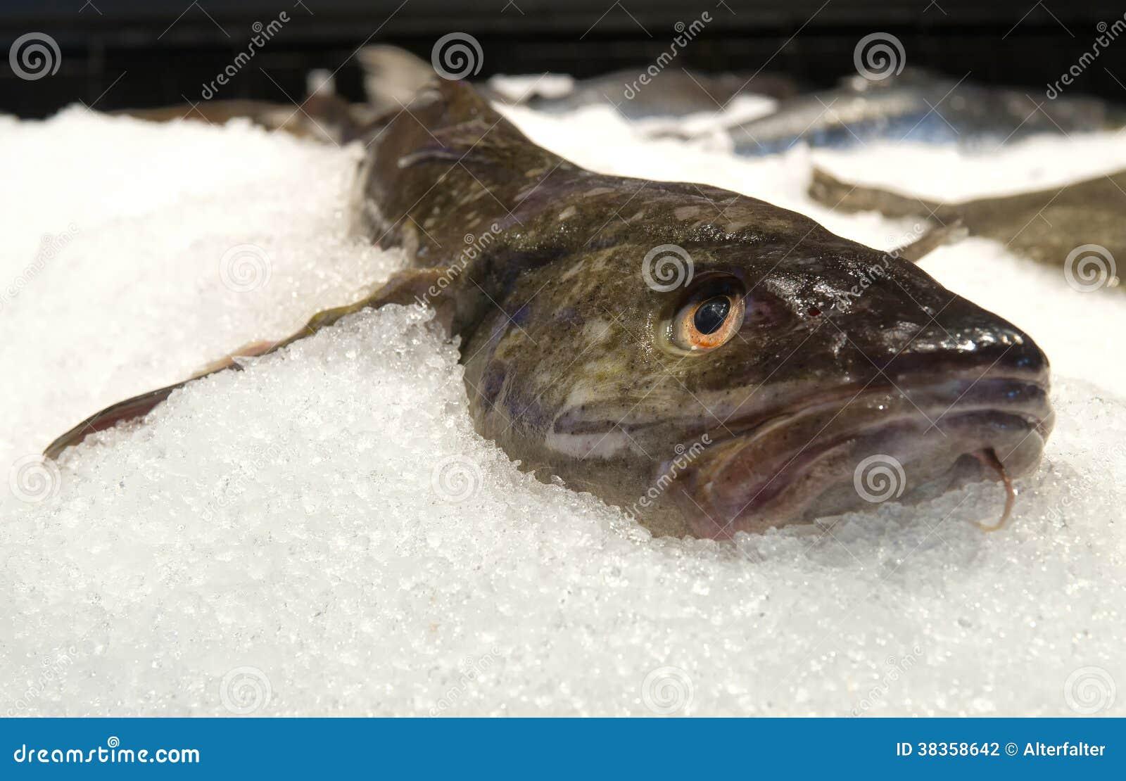 Catfish on ice stock photography image 38358642 for Ice fishing for catfish