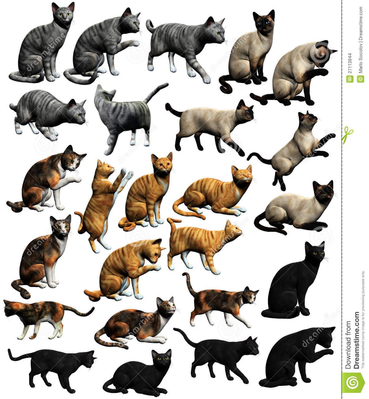 Different Types Of Cats Black And White