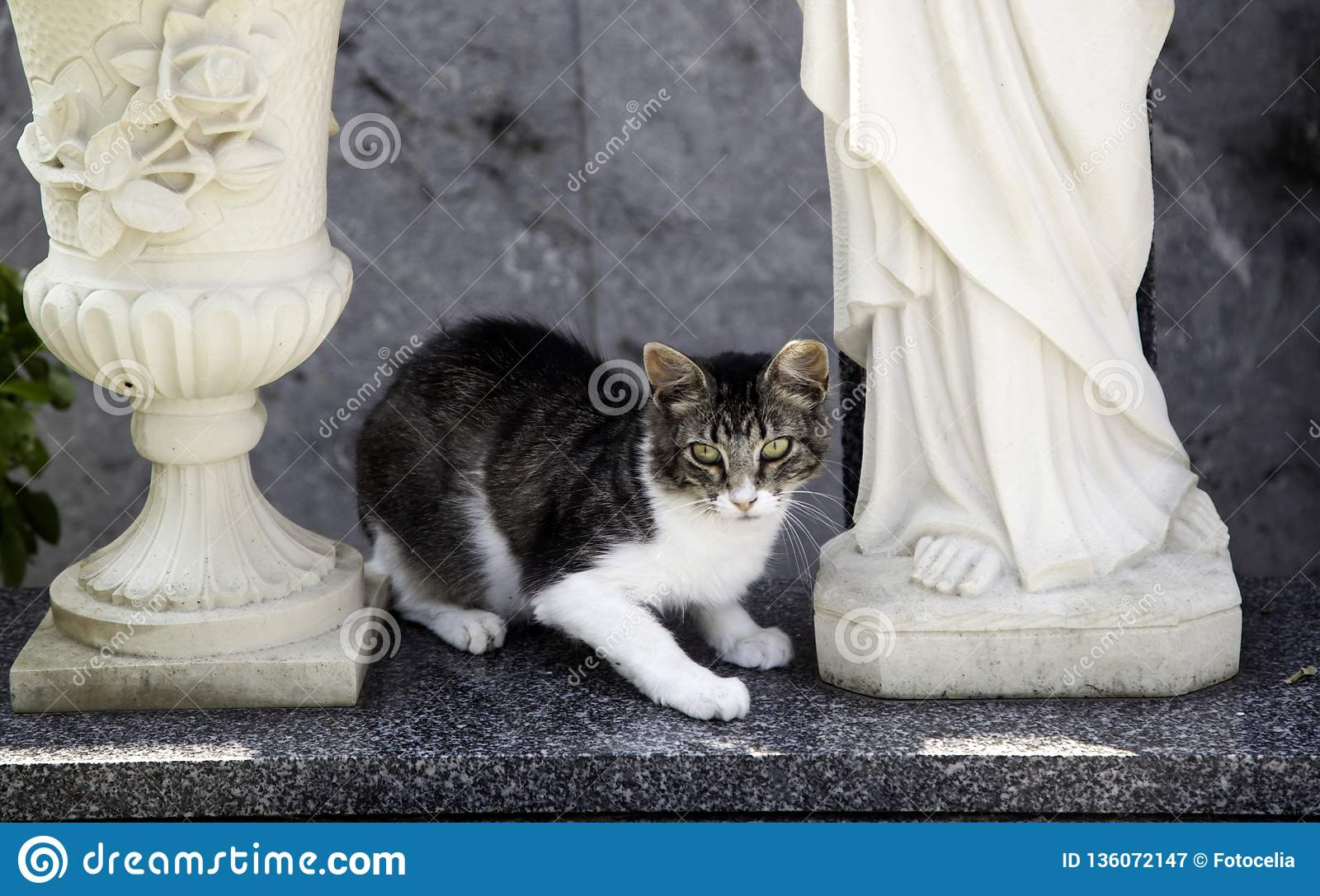 Cats abandoned street stock image  Image of nature, alone - 136072147