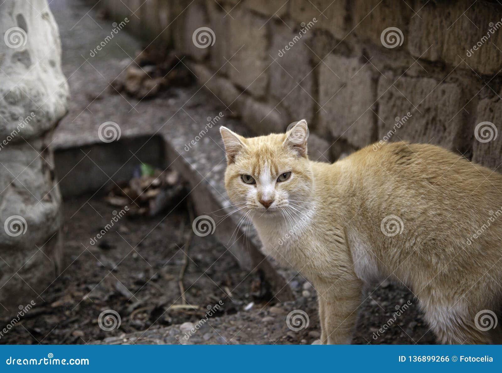 Cats abandoned street stock photo  Image of nature, black - 136899266
