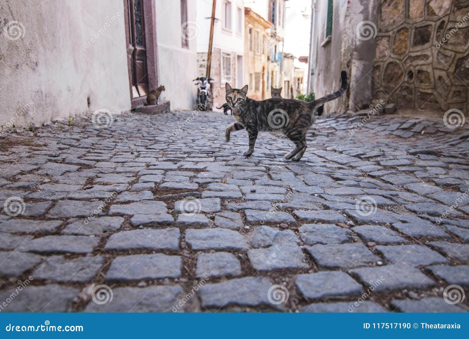 The cats on Ayvalik streets.