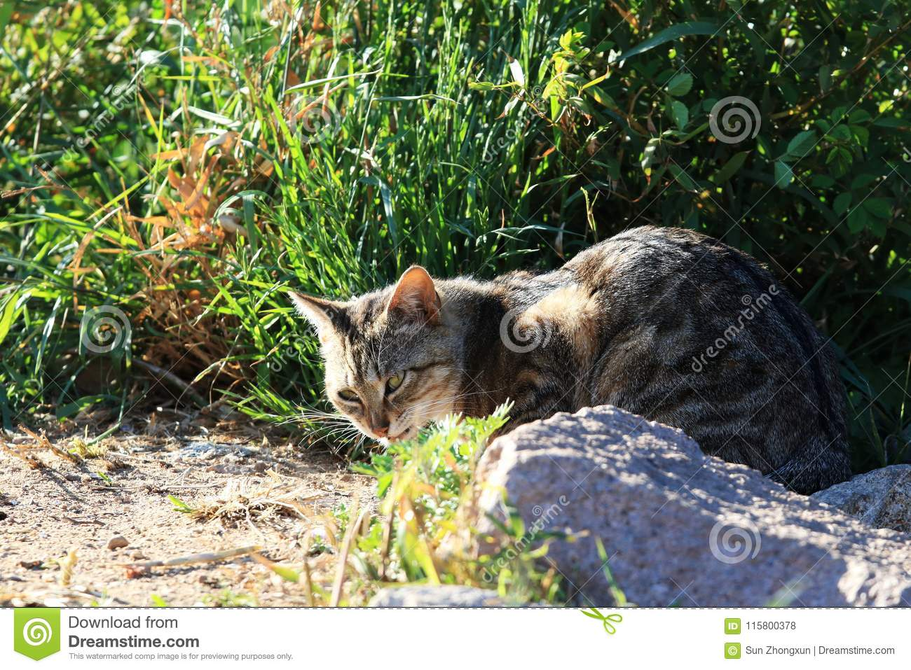 A watchful cat