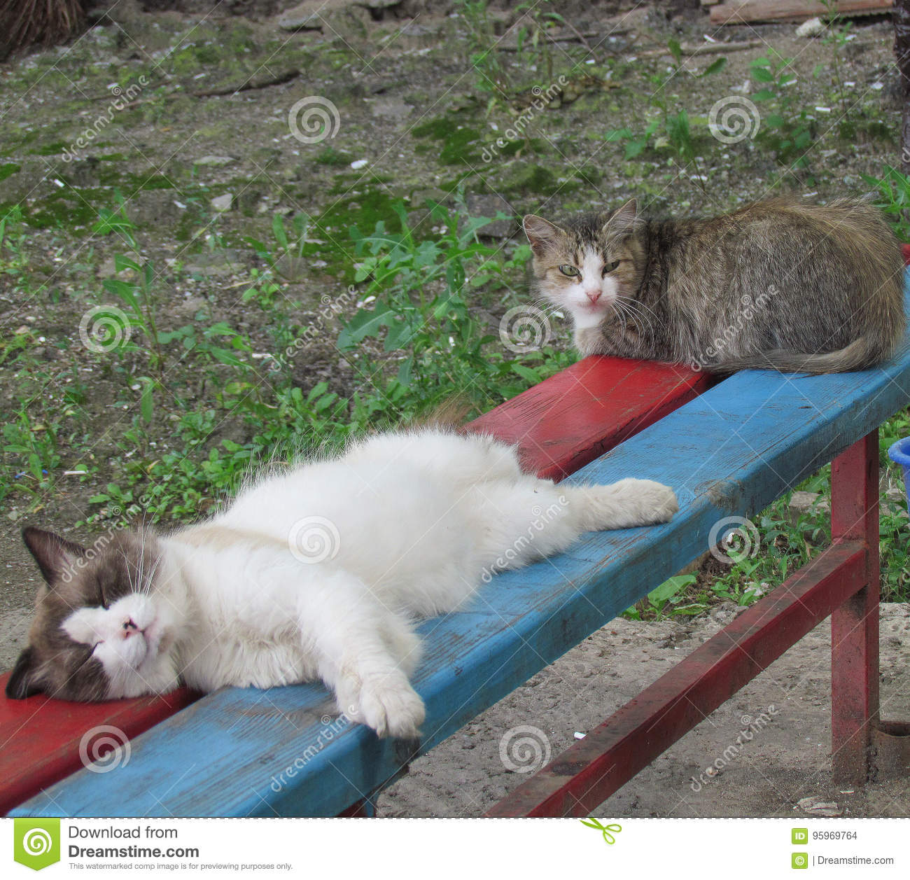 Cats on the bench