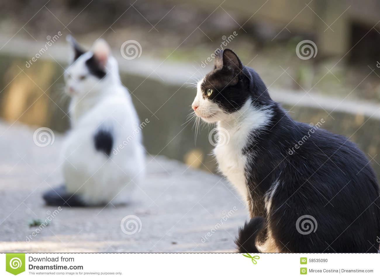 Cats Stock Photo - Image: 58535090