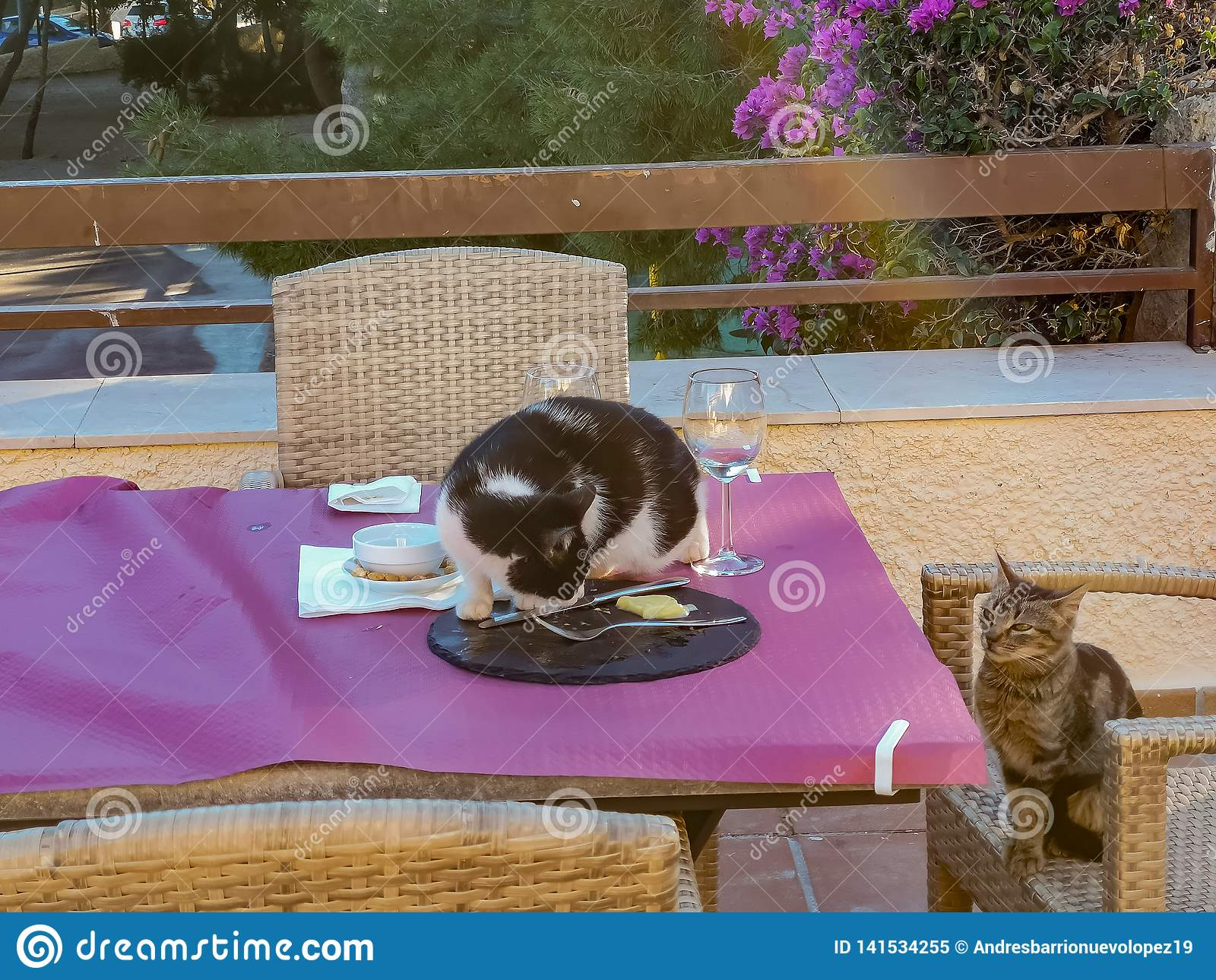 Cats chipping food off a table
