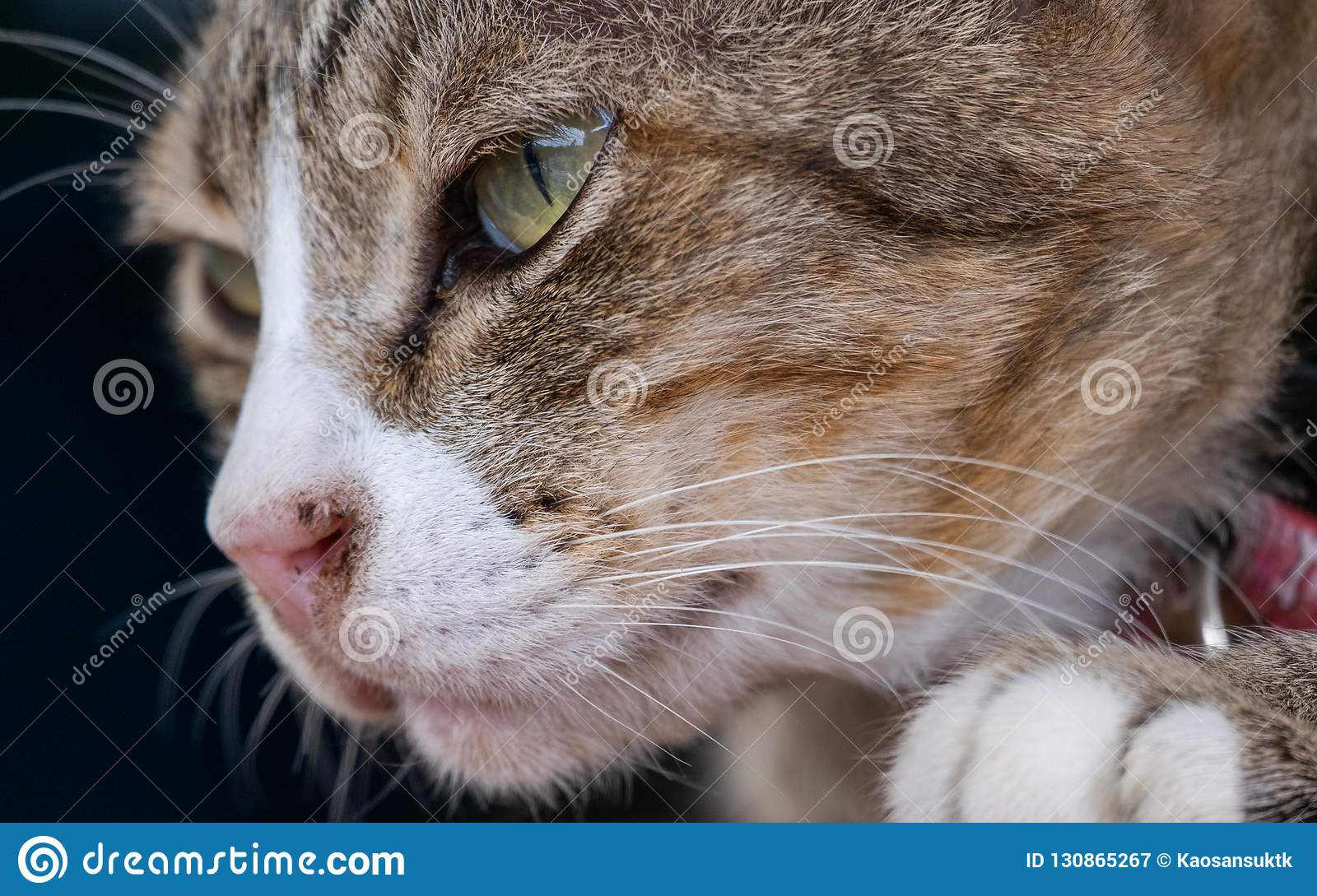 Cats are cute pets and like to be close to the owner. But the cat`s deep habit is bad.