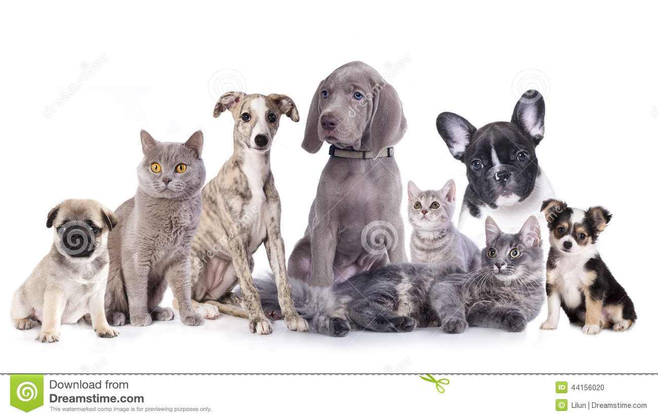 Group of dogs and cats - photo#13