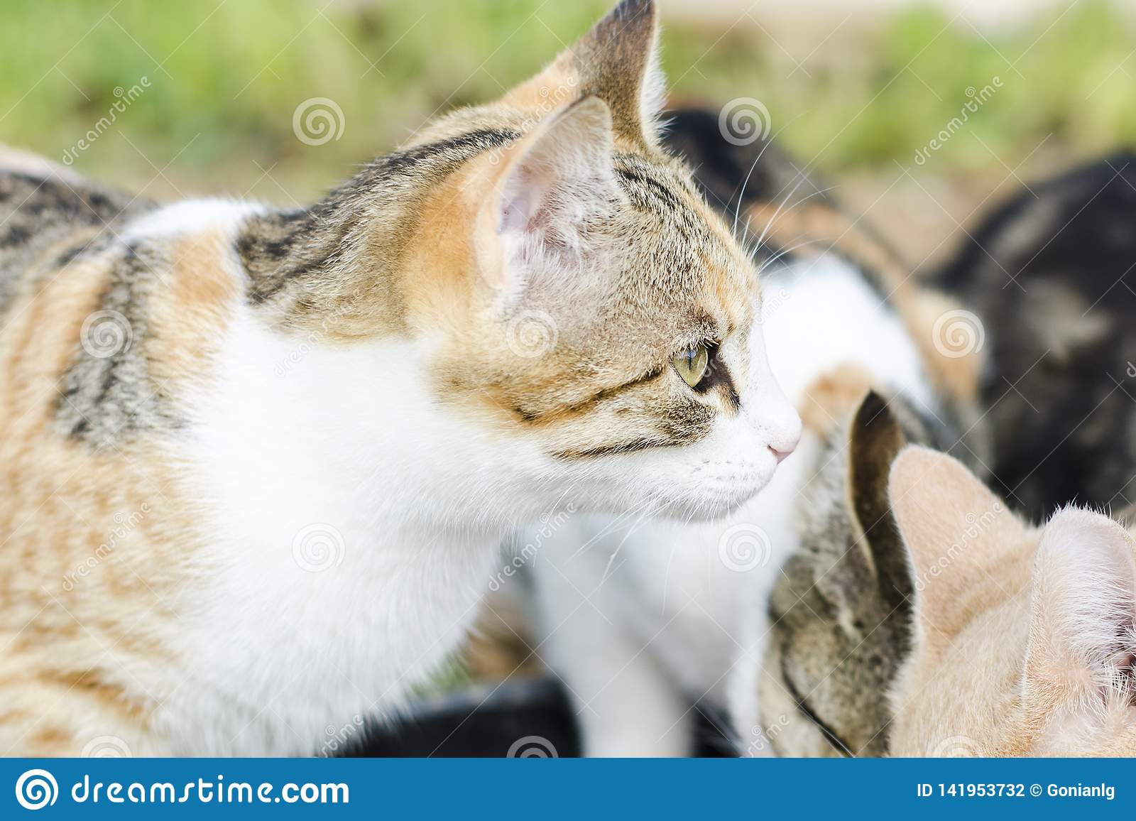 Cats eat cat food. Big cat and small kitten eating pieces of meat from the plate. We see pink tongue. Snouts large cats. Food for