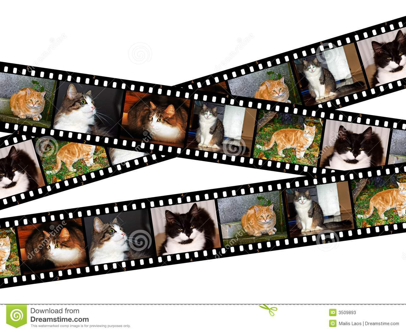 Cats Filmstrips