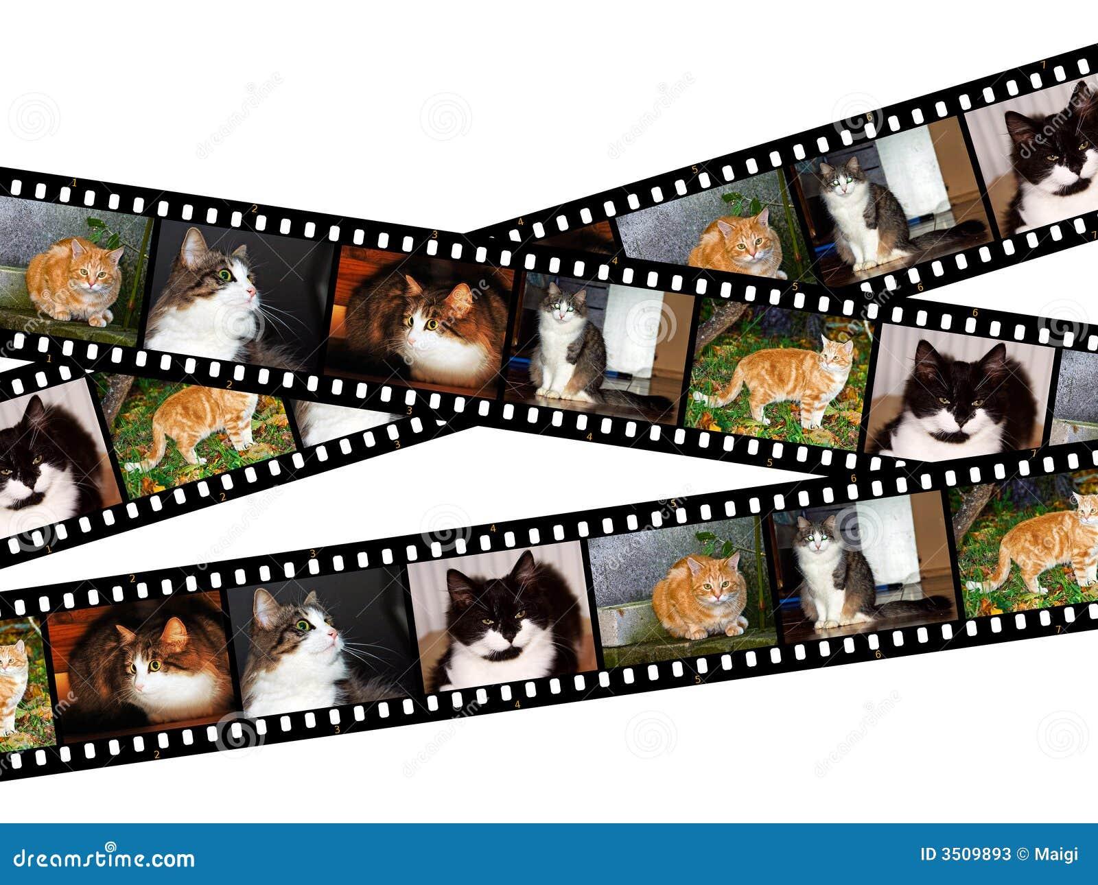 Cats Filmstrips