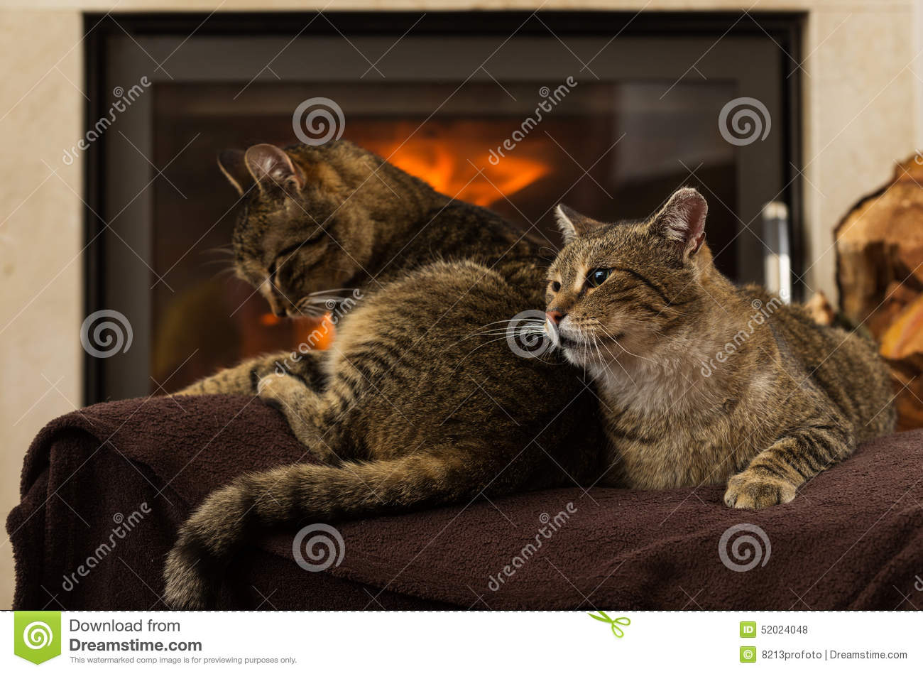Cats In Front Of Fireplace Stock Photo - Image: 52024048