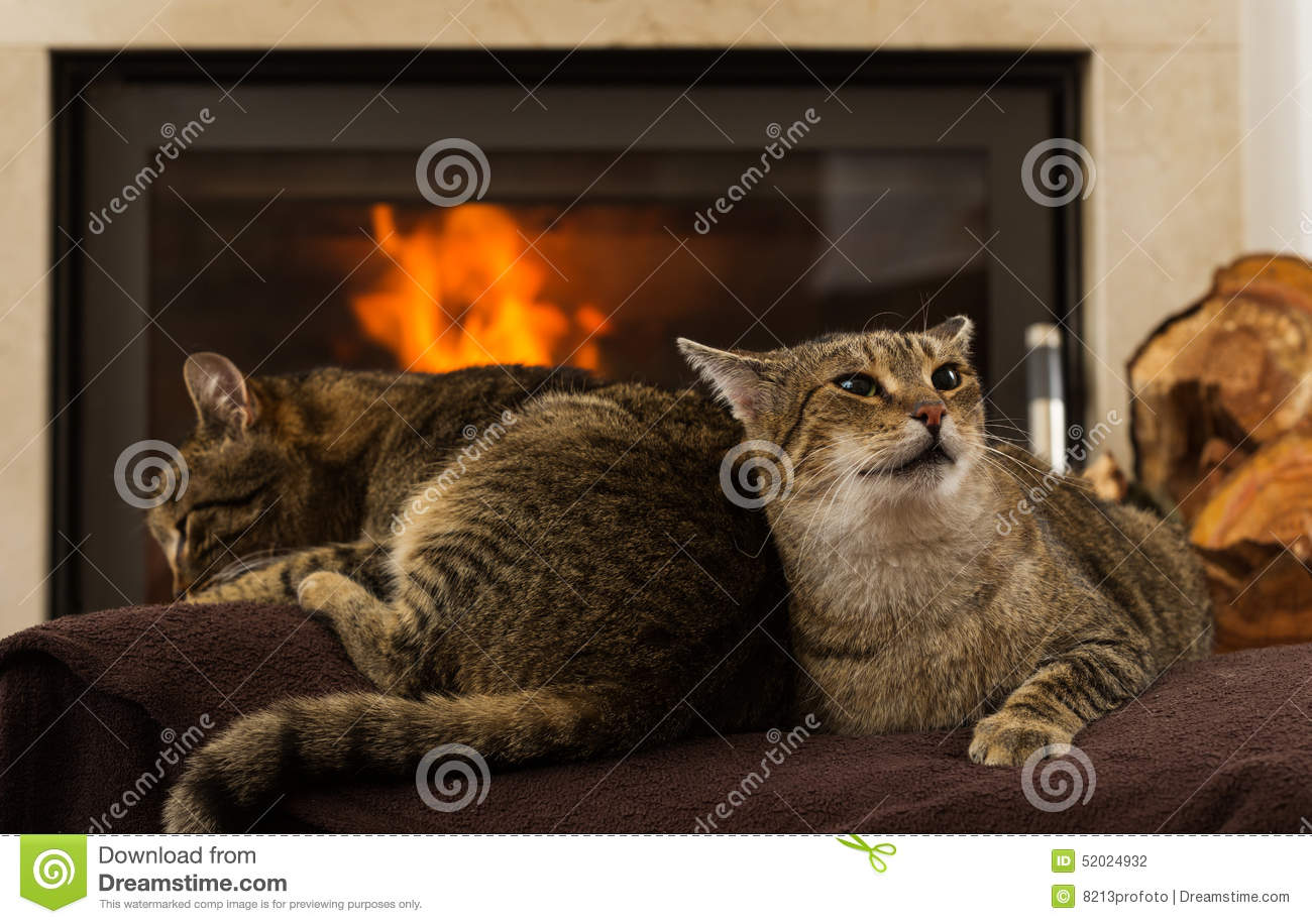 Cats In Front Of Fireplace Stock Photo - Image: 52024932