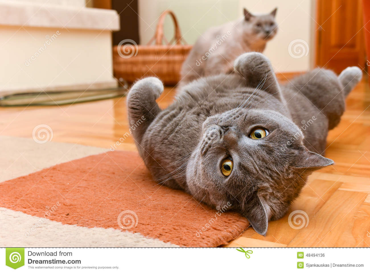 Cats having fun stock photo image 48494136 for Having an indoor cat