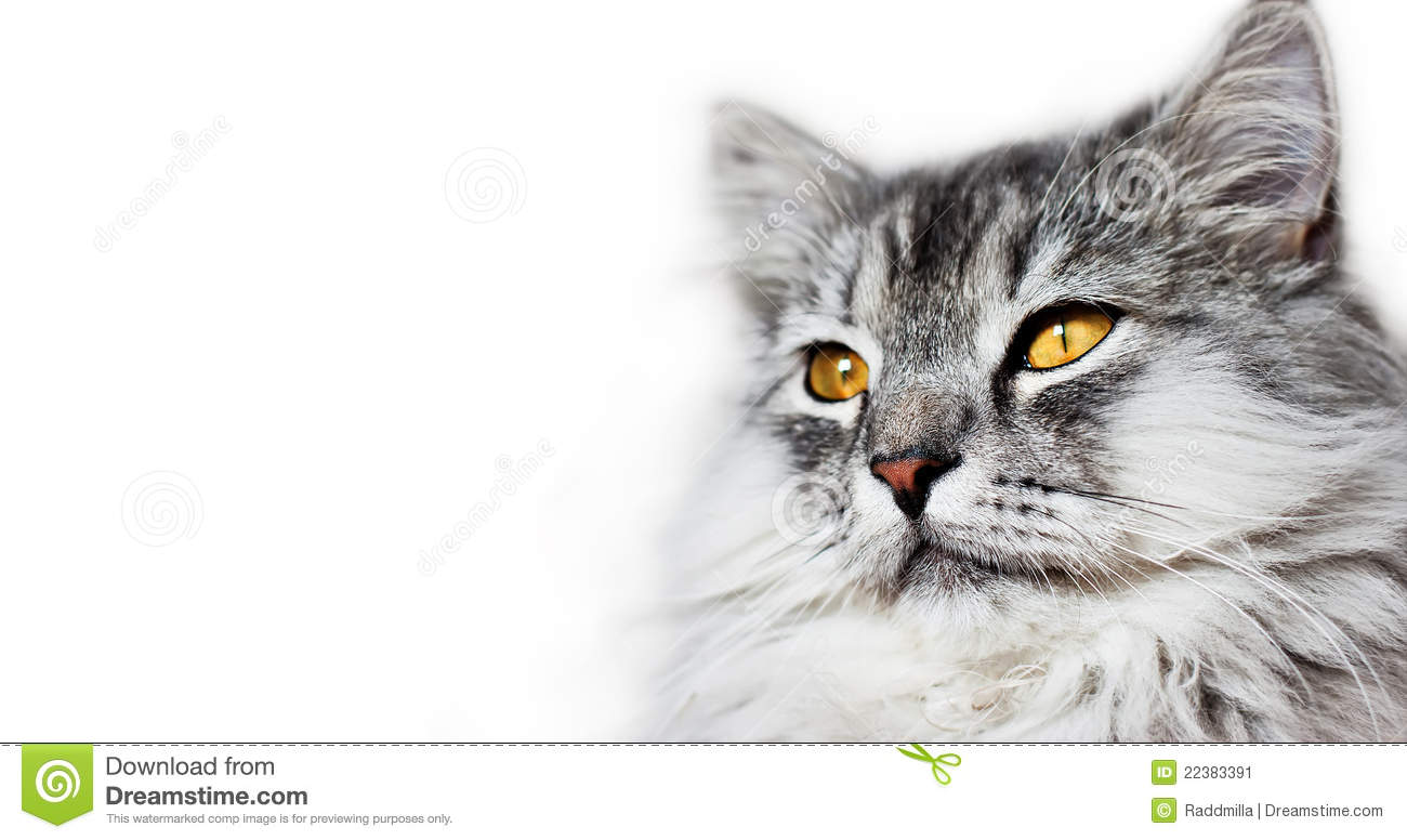 Cats Head Stock Image ...