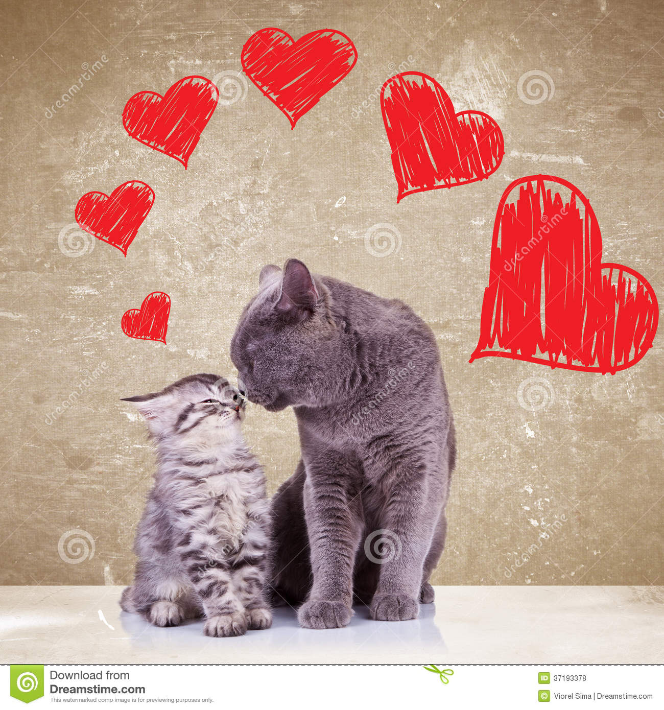 Catnip Toys For Valentine S Day : Cats kissing on valentines day stock photo image