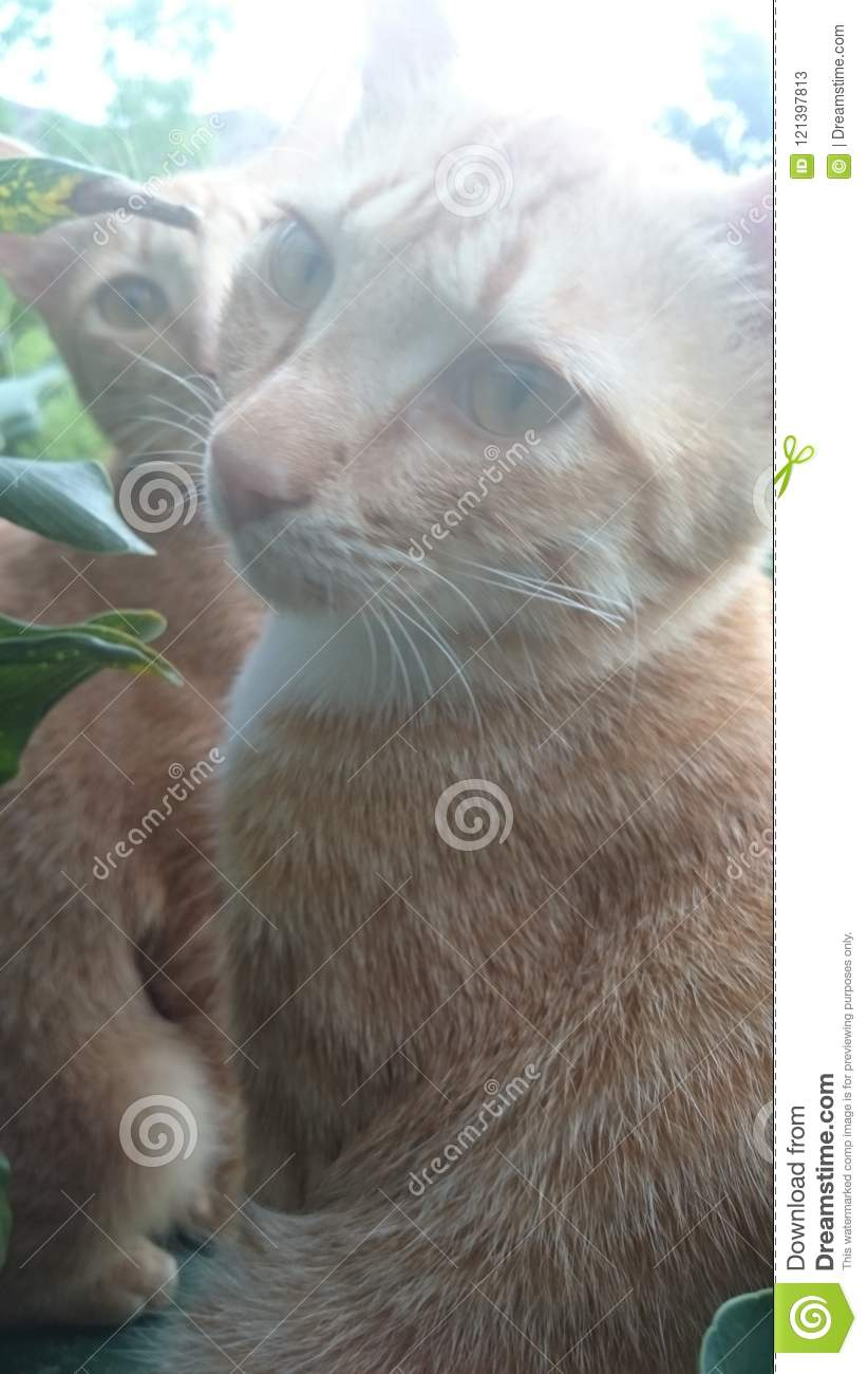 Cats Stock Image Image Of Cats Selfie Photoshoot 121397813