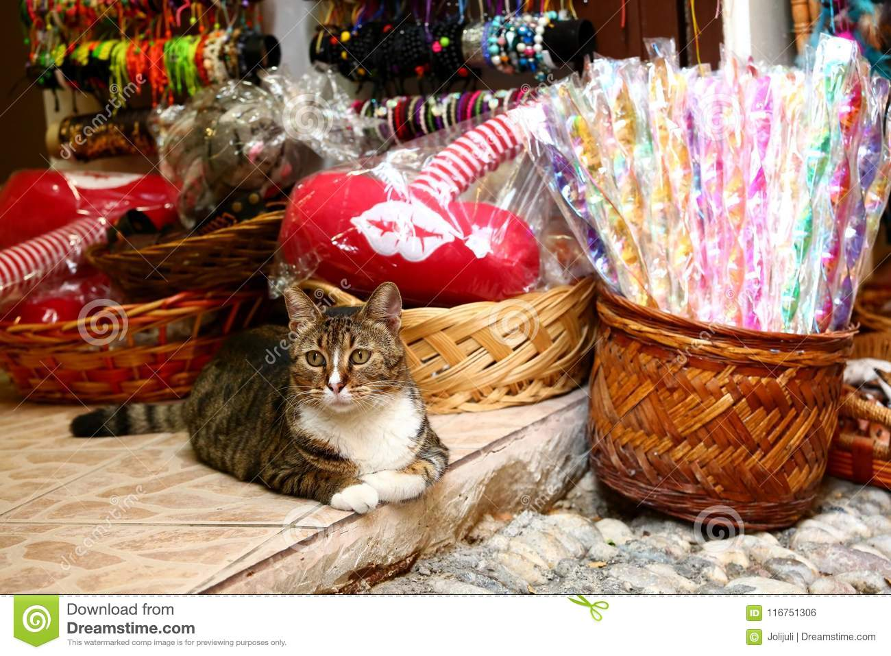 Cats and shops