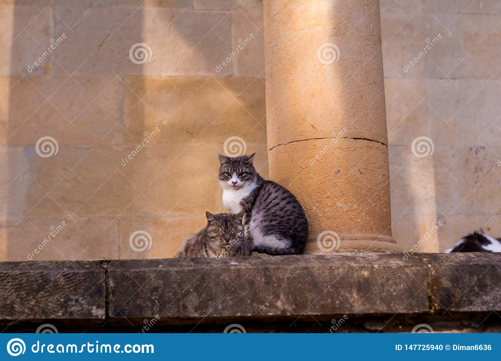 Cats sit on a stone and fall asleep