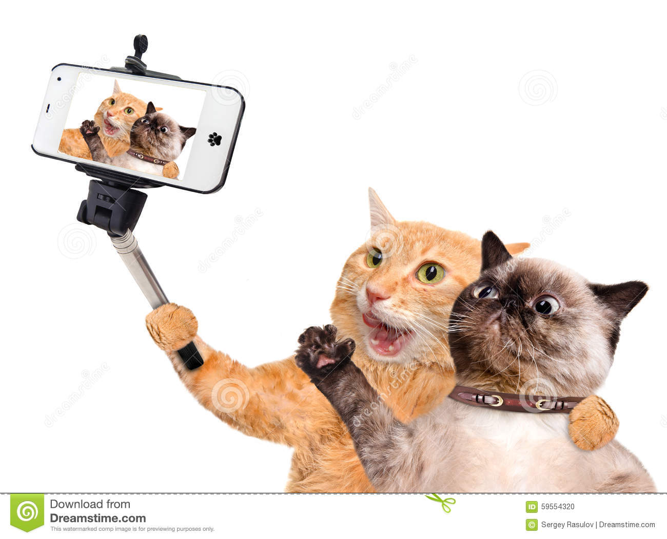 Cute Cats And Dogs Selfi