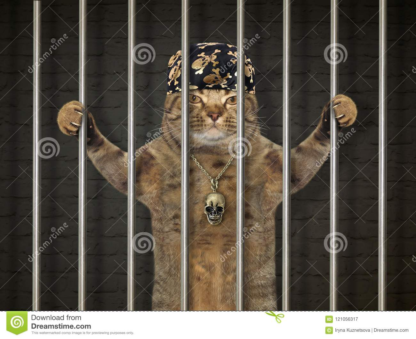 Cattivo gatto dietro le barre