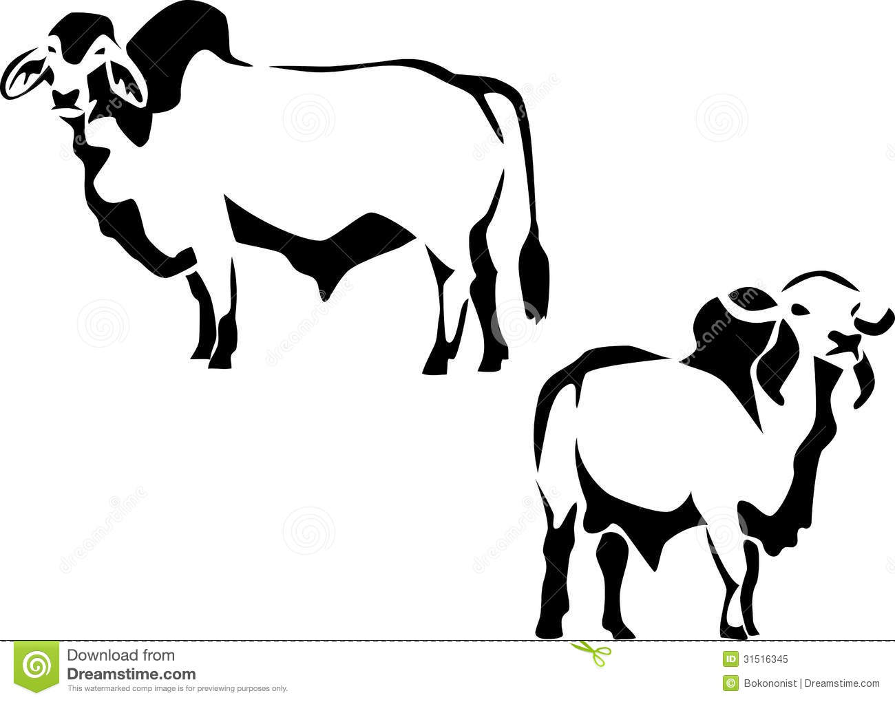 cattle royalty free stock photo image 31516345