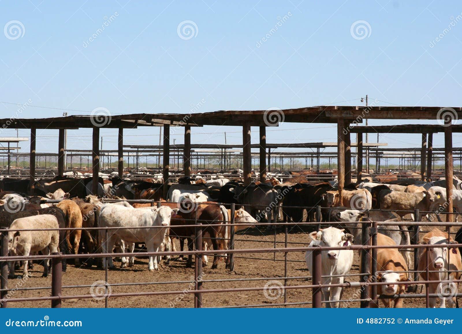 Cattle Farm Business Plan