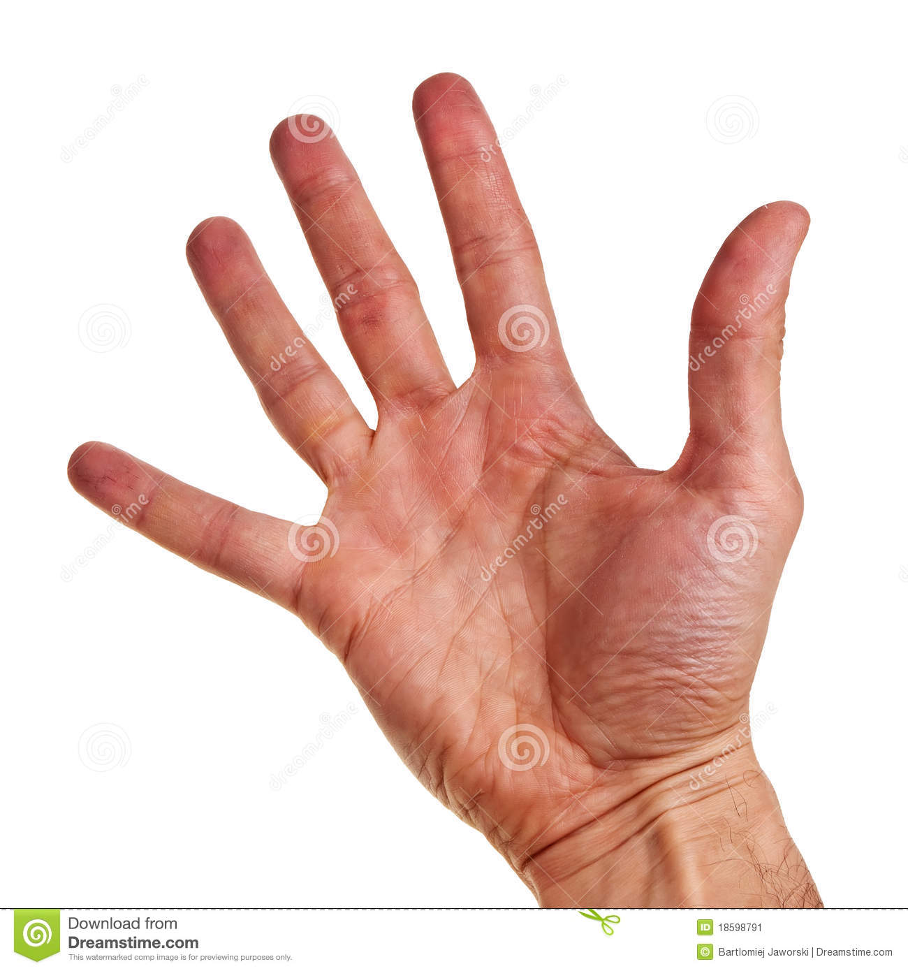 Caucasian Male Right Hand. Stock Image - Image: 18598791 Hand